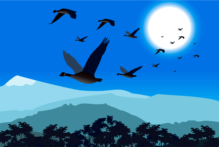 migrar